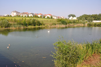 Bassin Blanche de castille